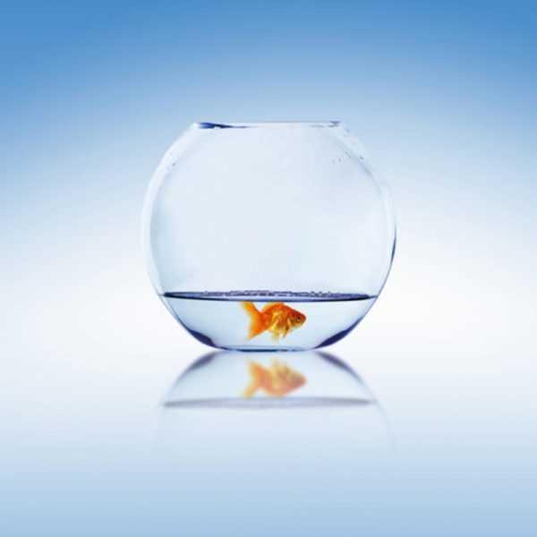Ontevreden vis in kom met laag water.